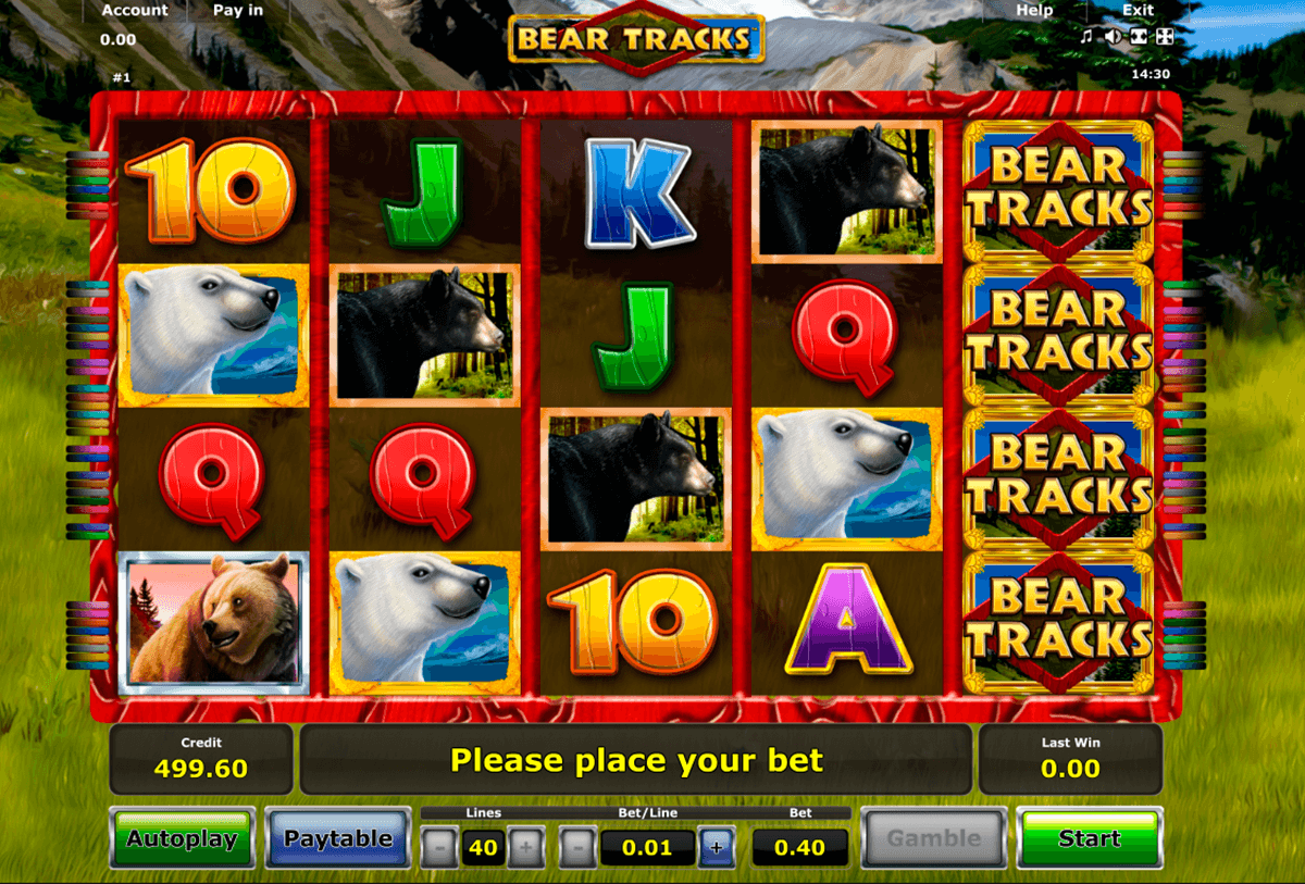 bear tracks novomatic casino slot spel